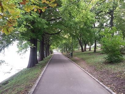 mopana-autumn-tree-17