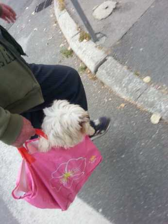 mopana-puppy-in-a-bag-05