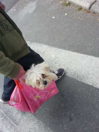 mopana-puppy-in-a-bag-06