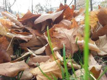 mopana-leaves-we-ll-never-fall- alone-03