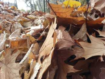 mopana-leaves-we-ll-never-fall- alone-04
