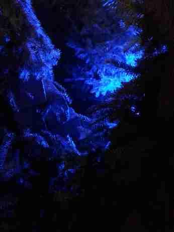mopana-Christmas-trees-market-07