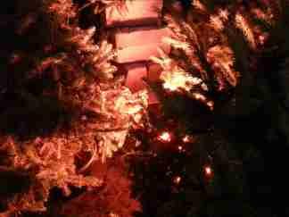 mopana-Christmas-trees-market-05