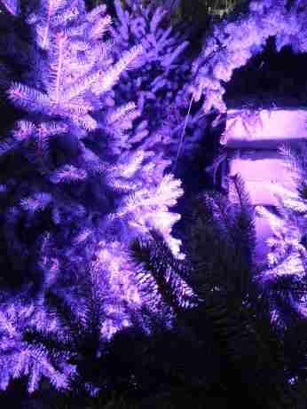 mopana-Christmas-trees-market-02