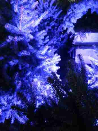 mopana-Christmas-trees-market-01