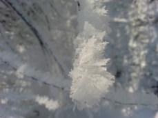 mopana-little-snowflake-02