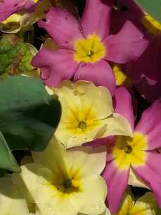 flowers-04