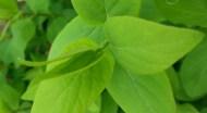 green-spring-02