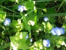mopana-blue-like-your-eyes-01