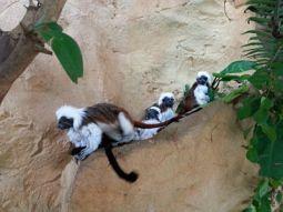 mopana-monkeys-vienna-aquarium-04