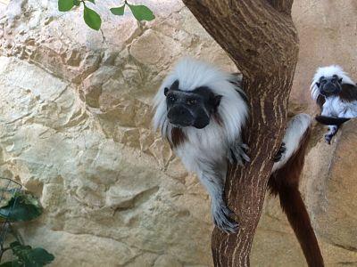 mopana-monkeys-vienna-aquarium-08
