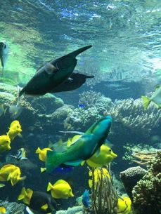 mopana-vienna zoo-aquarium-02