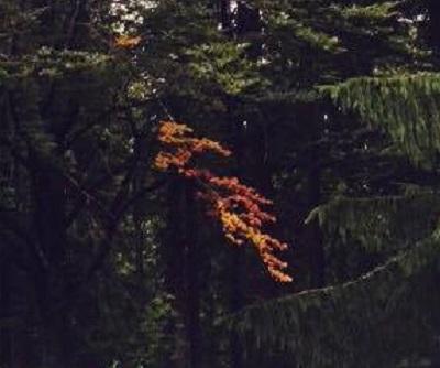 mopana-autumn-colors-02