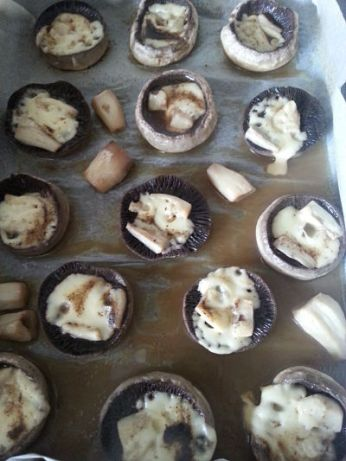mopana-champignon-mushrooms-11