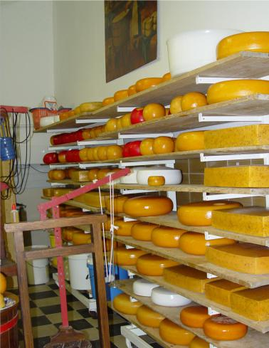 mopana-amsterdam-cheese-factory