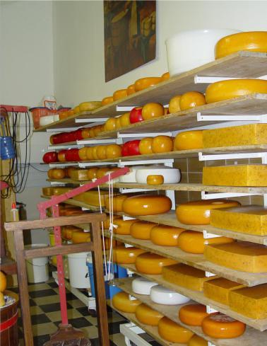mopana-amsterdam-cheese-factory