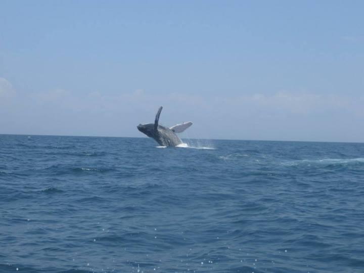 contadora whales