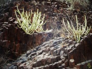 hexagonal stones and cacti