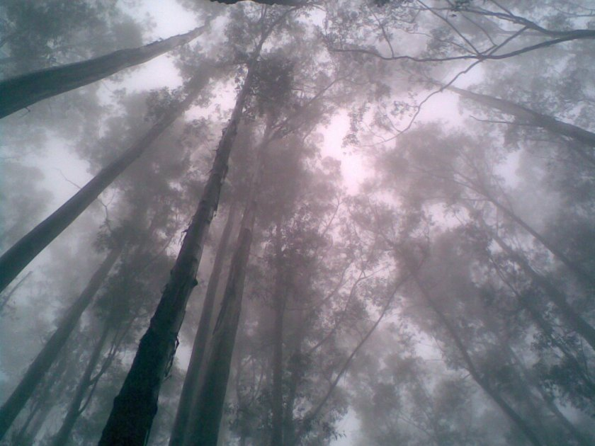 Ooty_forest_in_fog