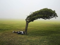 Green Point Common, Cape Town, 2013, © Pieter Hugo