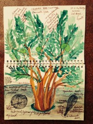 The Calabash tree.