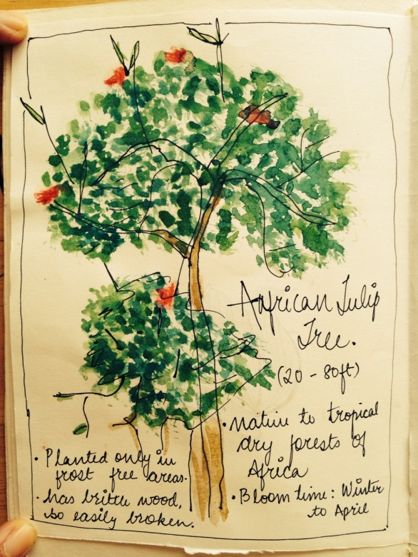 The African Tulip tree