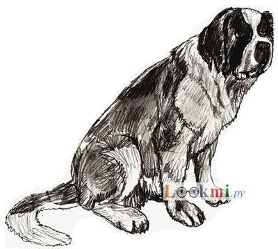 Собака алабай как нарисовать