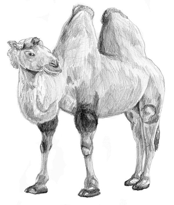 trup a východ na koni