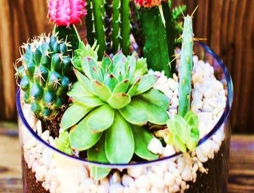 jardin miniatura cactus bisuteria