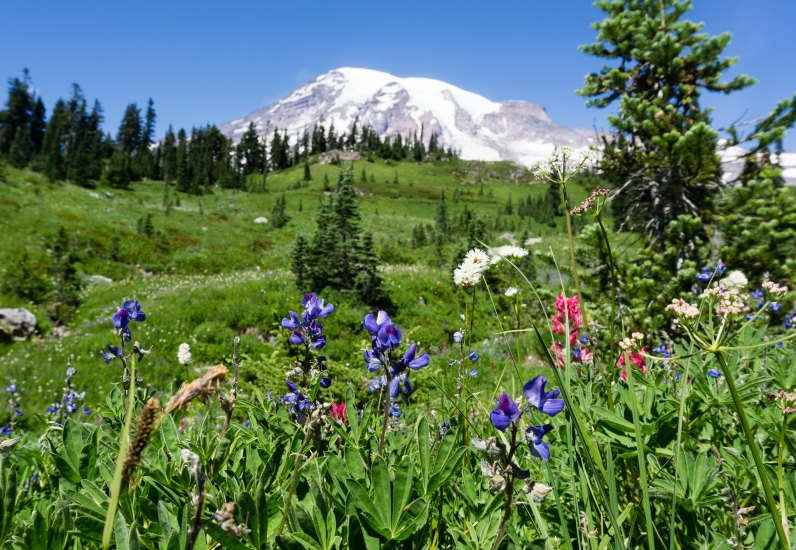 Built around Mount Rainier, the tallest mountain in the pacific northwest, the Mount Rainier National Park is a great way to explore the natural wonders and beauty of Washington State.
