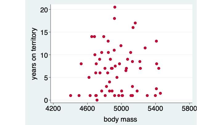 3impact of lk size, male body size, on terr tenure