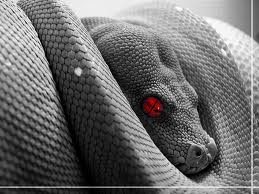 The Ego is a Snake, often coiled, but always ready to attack
