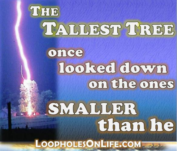 The Tallest Tree once looked down upon the ones smaller than he, then got struck by lightning!