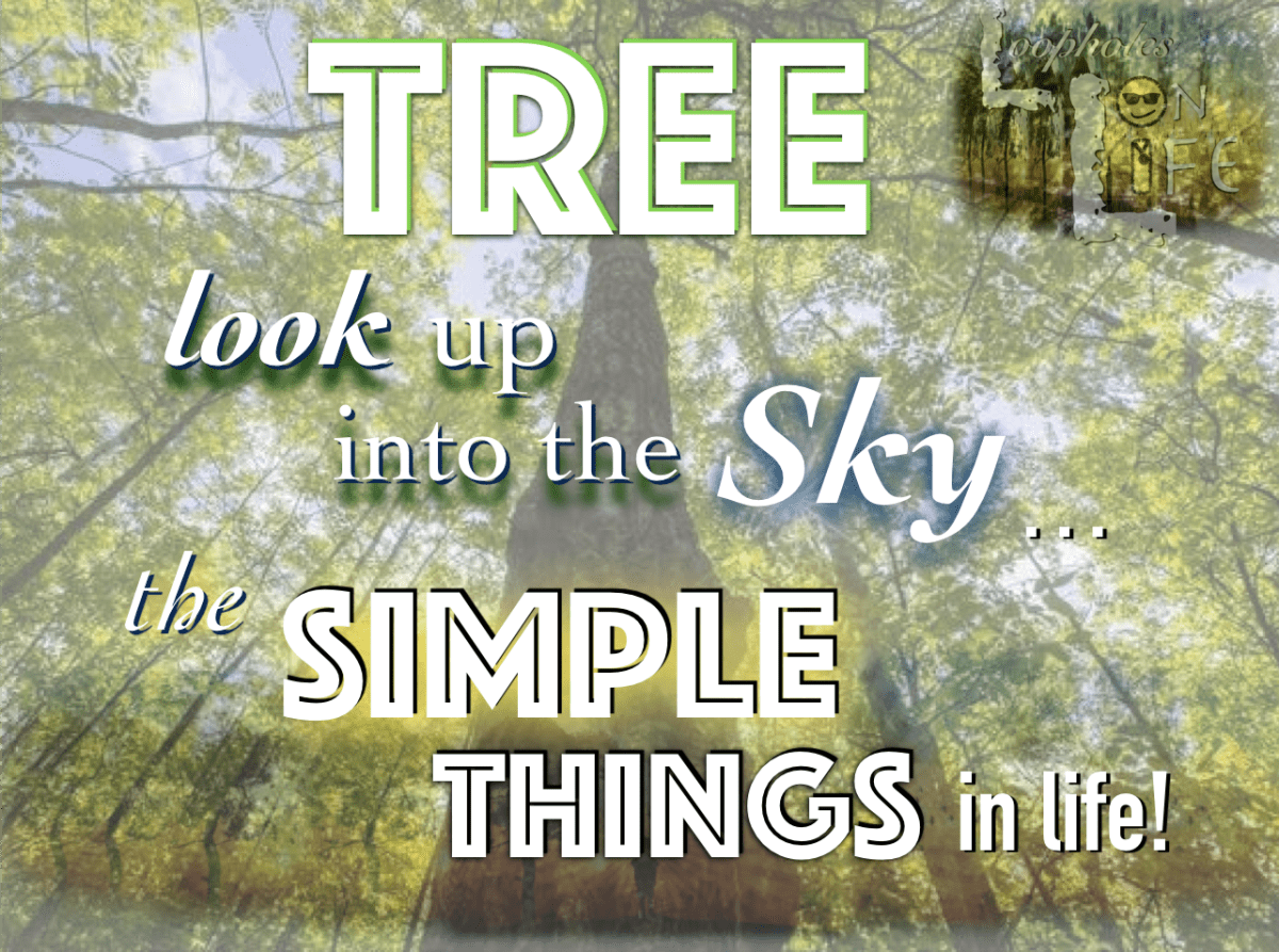 """A Tree in the Sky and Simple Things in Life!"" #132"