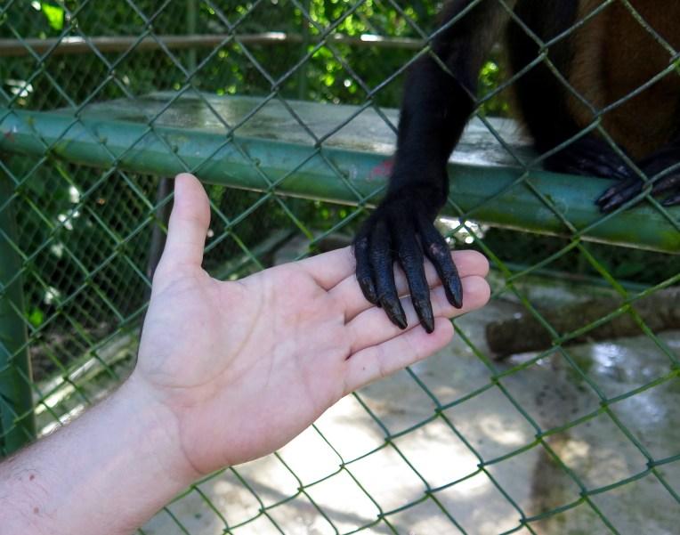 Monkey Handshake