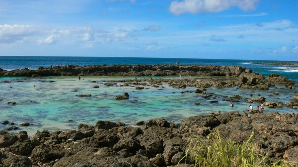 sharks_cove_tide_pools