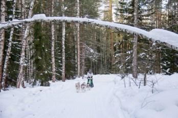 dmitrov-dogsledding-23
