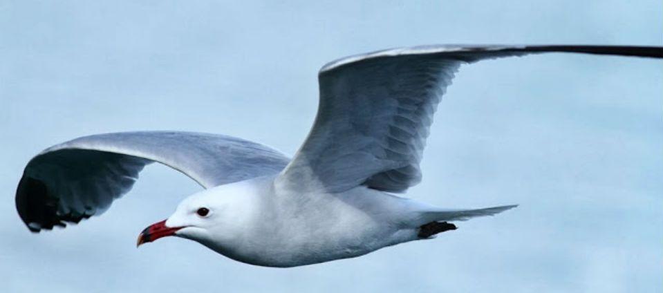 Calentamiento global desplaza a aves en Estados Unidos - Foto de Internet