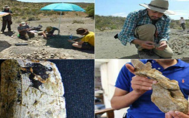 Paleontólogos encuentran gran cementerio de dinosaurios en Coahuila - Foto de Museo del Desierto