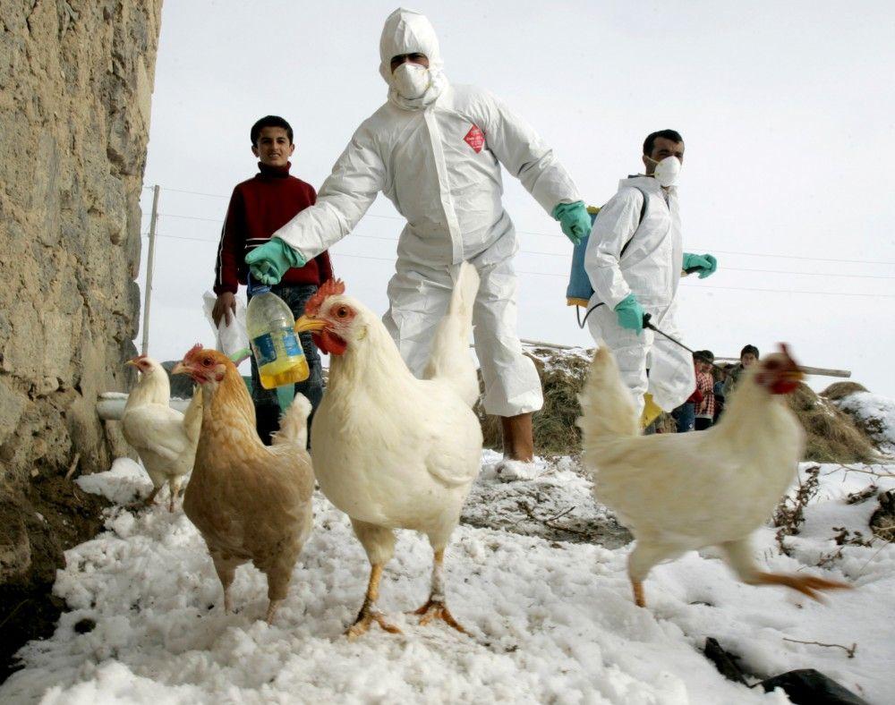 Granjas de Jalisco en fase final de vacunación contra gripe aviar - Internet