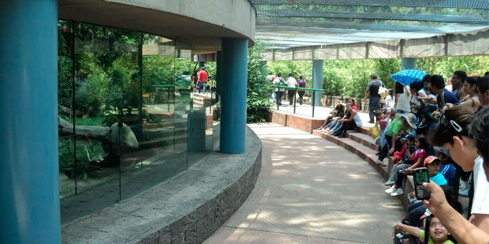 Se invertirán 90 millones de pesos en zoológicos - Zoológico de Chapultepec