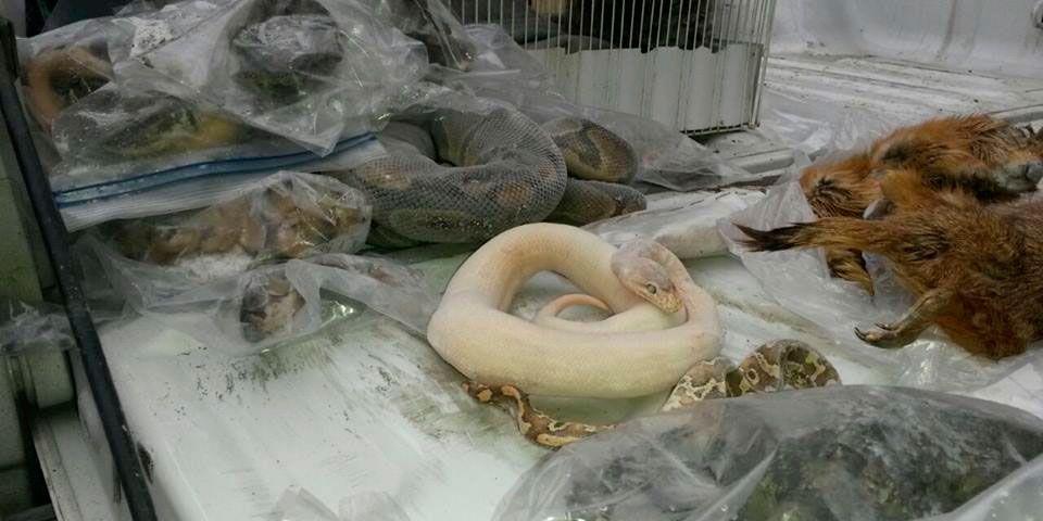 Casa en Monterrey es cateada por vender animales exóticos