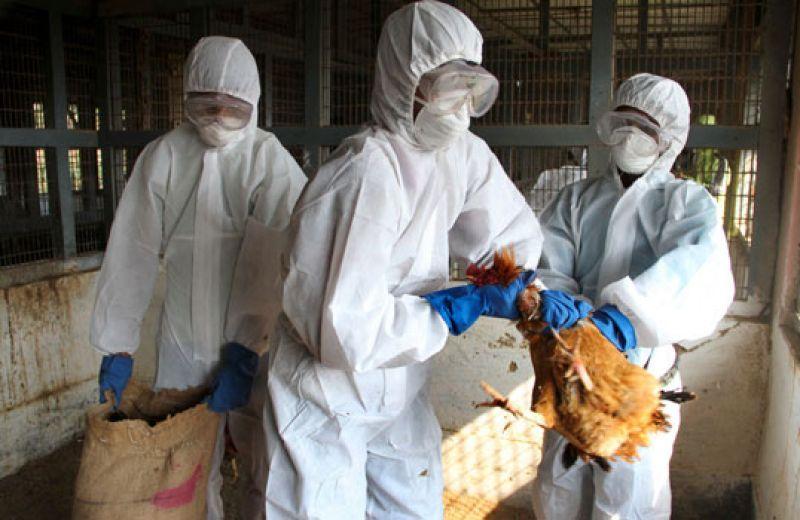 Emiten alerta sanitaria por brote de gripe aviar en Oaxaca - Gripe aviar en Oaxaca