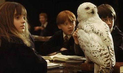 PETA denuncia a Harry Potter - Foto de CNN Expansión