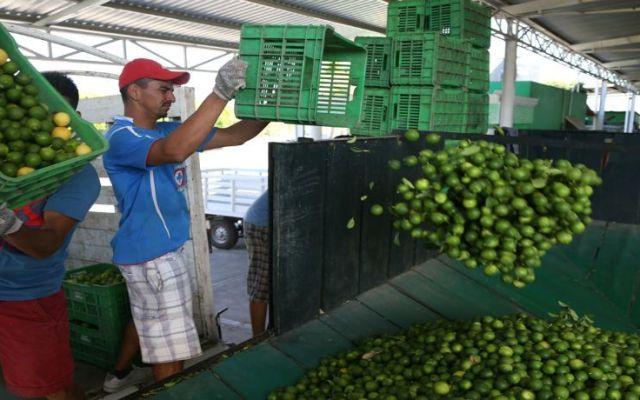 Productores denuncian anomalías en alza de precios del limón - Foto de archivo