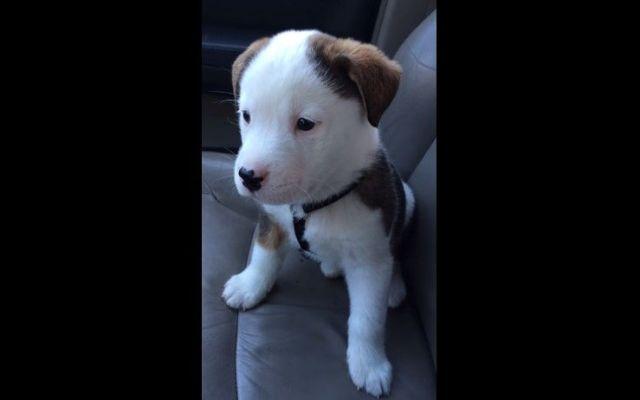Video: Cachorro ladra a su propio ataque de hipo - Video: Cachorro ladra a su propio ataque de hipo