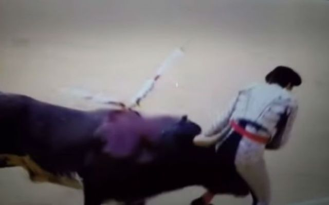 Torero recibe una cornada en una ingle