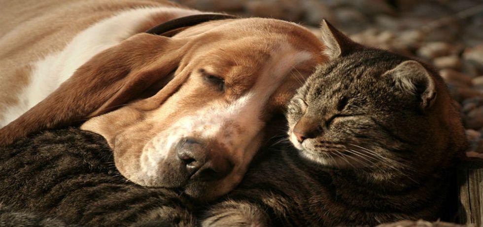 Hasta tres años de cárcel por abandonar un animal en Edomex - Foto de archivo