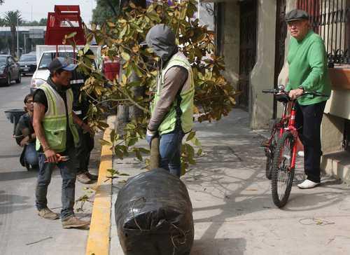 SEDEMA autorizó el derribo de 9 mil 615 árboles