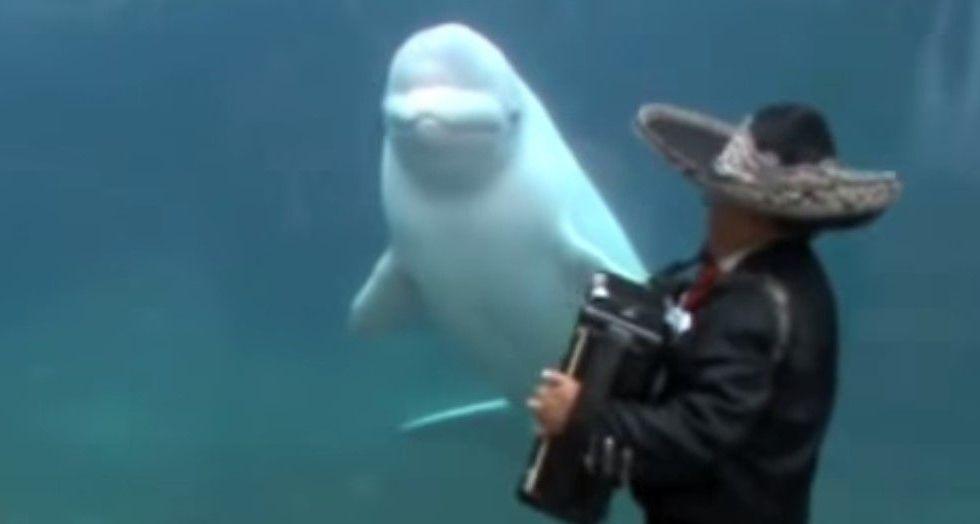 Mariachis llevan serenata a ballena beluga en EE.UU. - Foto de YouTube